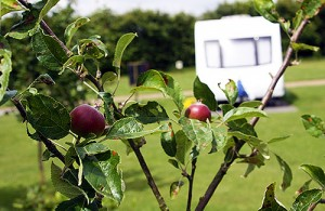 Caravan with apple tree to foreground.